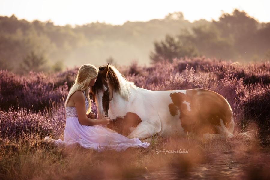 Pferdebild